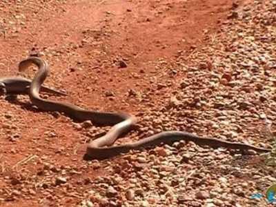 世界上最大的蛇Top10最大的蛇竟有14.6米 世界最长的蟒蛇