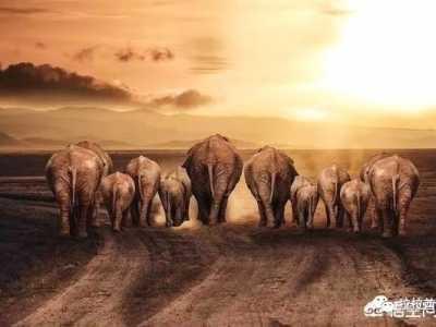 体型最大的动物是什幺 陆地上最小的动物