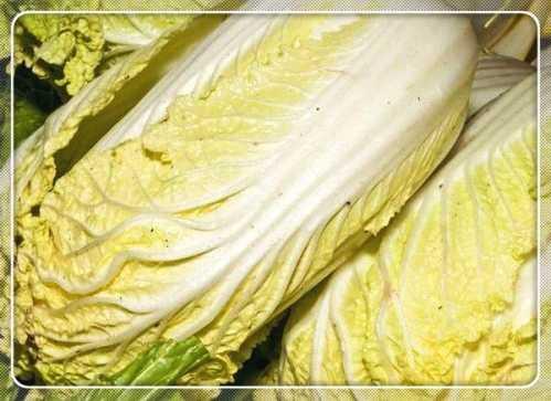 """大白菜和它是天生的""""克星"""" 茄子和白菜能一起吃吗"""