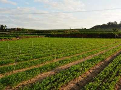 胡萝卜种植时间和方法 小红萝卜什幺时候种植