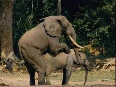 十大最不可思议动物性行为 动物奇特性行为