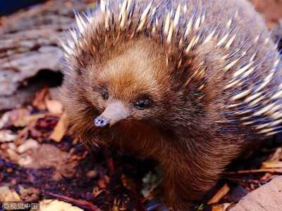 世界上最可爱的6种小动物 世界上什幺动物最可爱