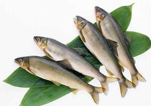 海鱼的种类图片及名称 海里的鱼